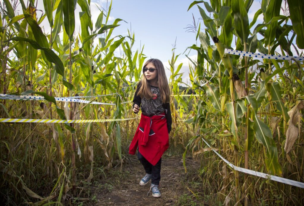 Get lost, but not too lost, in the corn maze at Ricker Hill Orchards in Turner.