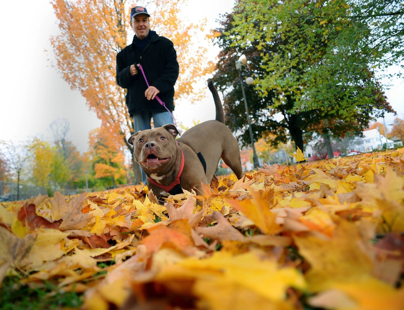 Low angle view of dog in yellow leaves