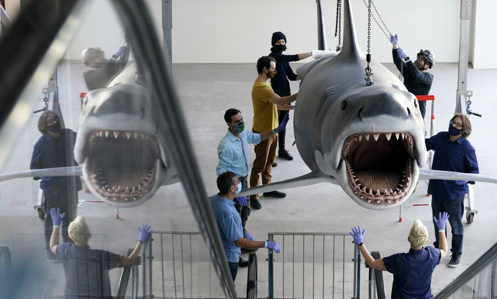 "A fiberglass replica of Bruce, the shark featured in Steven Spielberg's classic 1975 film ""Jaws,"" is raised to a suspended position for display at the new Academy of Museum of Motion Pictures on Friday in Los Angeles. The museum celebrating the art and science of movies is scheduled to open on April 30, 2021."