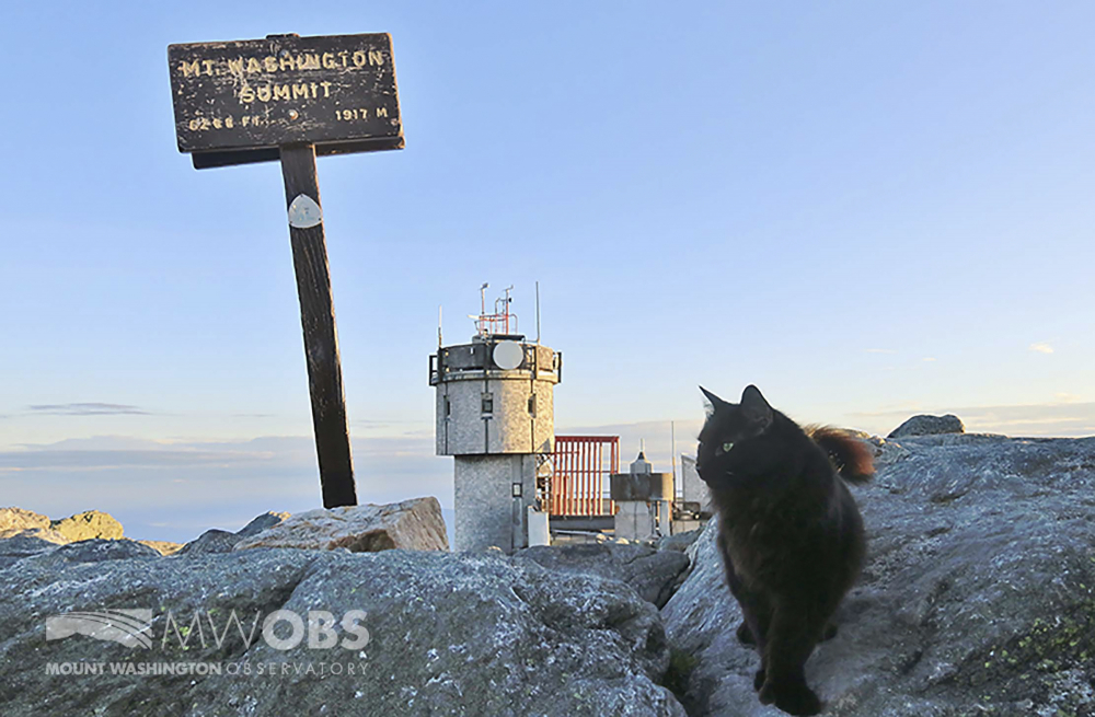 Marty the cat walks on a boulder outside the Mount Washington Observatory in North Conway, N.H., in June. The black Maine coon cat, who has patrolled the Northeast's highest peak for a dozen years as its weather observatory's mascot, has died.