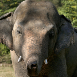 Pakistan_Loneliest_Elephant_81009