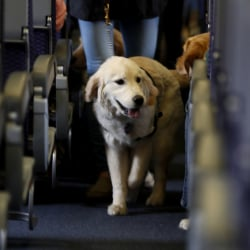 Airlines_Service_Animals_46701
