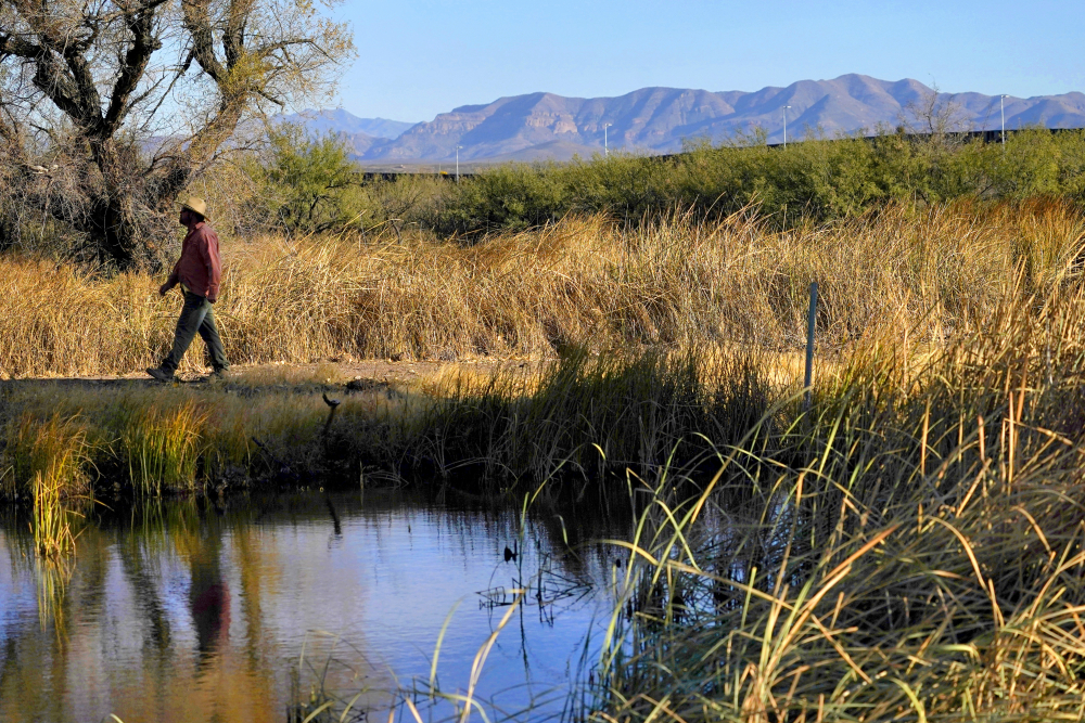 Myles Traphagen, Borderlands Program Coordinator for Wildlands Network, walks through a marsh area as the top of a newly erected border wall cuts through the San Bernardino National Wildlife Refuge, Tuesday, Dec. 8, 2020, in Douglas, Ariz.  Construction of the border wall, mostly in government owned wildlife refuges and Indigenous territory, has led to environmental damage and the scarring of unique desert and mountain landscapes that conservationists fear could be irreversible.
