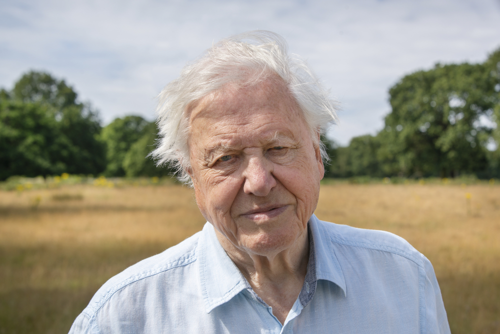 """David Attenborough narrates a new TV show called """"A Perfect Planet,"""" starting in January on the U.K.'s BBC One and Canada's BBC Earth. (Silverback Films 2020/BBC/Discovery via AP)"""