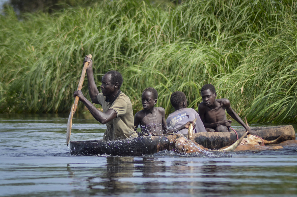 A father and his sons transport cows from a flooded area to drier ground using a dugout canoe, in Old Fangak county, Jonglei state, South Sudan on Nov. 25.