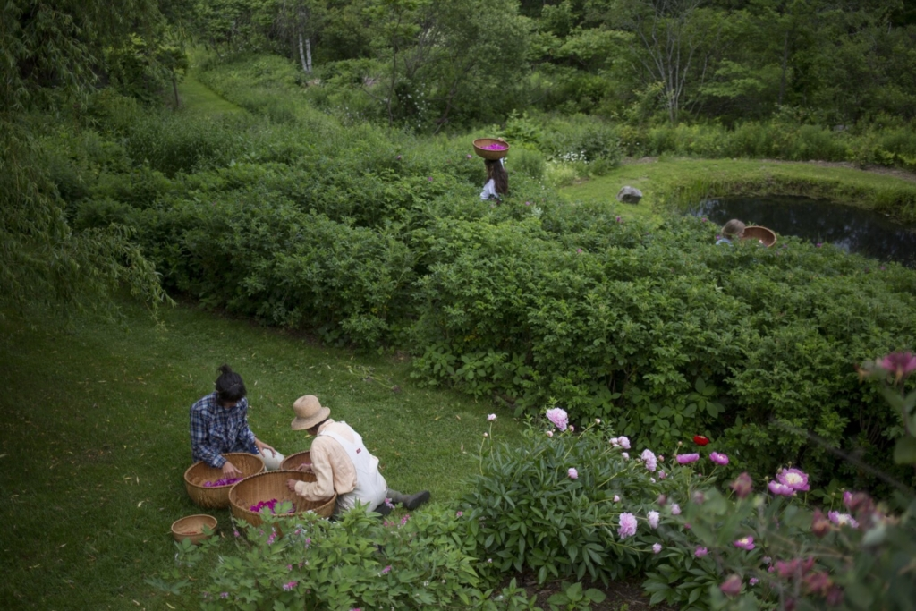 "Deb Soule and her staff of seasonal gardeners harvest rosa rugosa in 2017 in the Avena Botanicals garden. Soule's new book on ""The Healing Garden"" is due out in April."