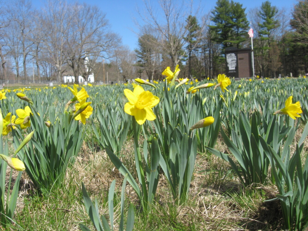 You know spring has sprung when you see these.