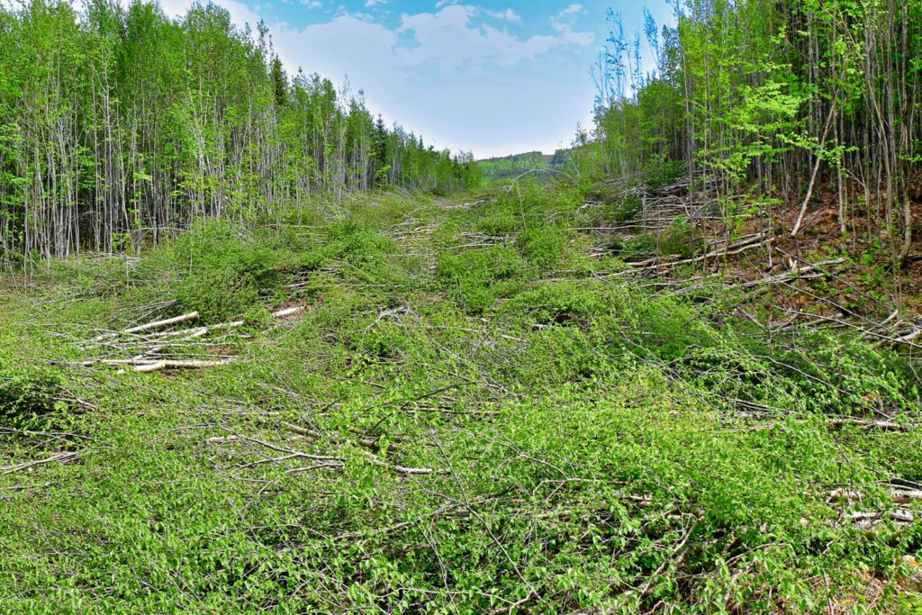 This undated photo from opponents of the New England Clean Energy Connect power corridor shows trees being cleared in western Maine. The group accused CMP of cutting too wide a swath, but state regulators disagreed.