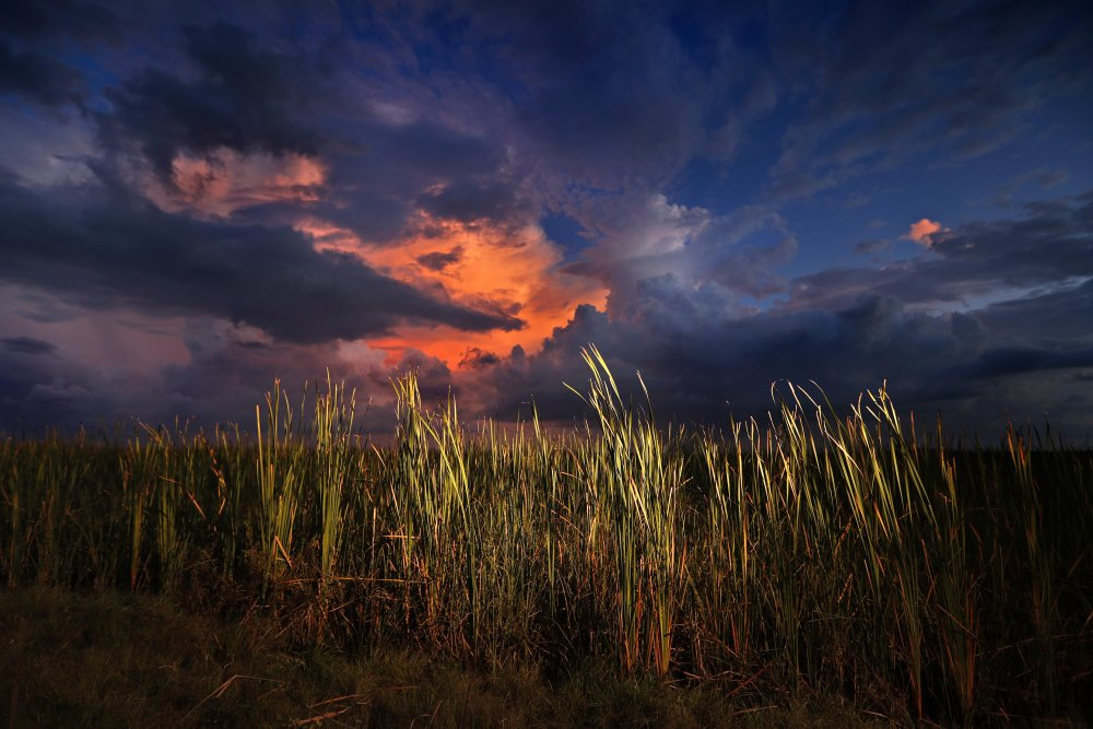 A clearing late-day storm adds drama in the sky over a sawgrass prairie in Everglades National Park in Florida in 2019.