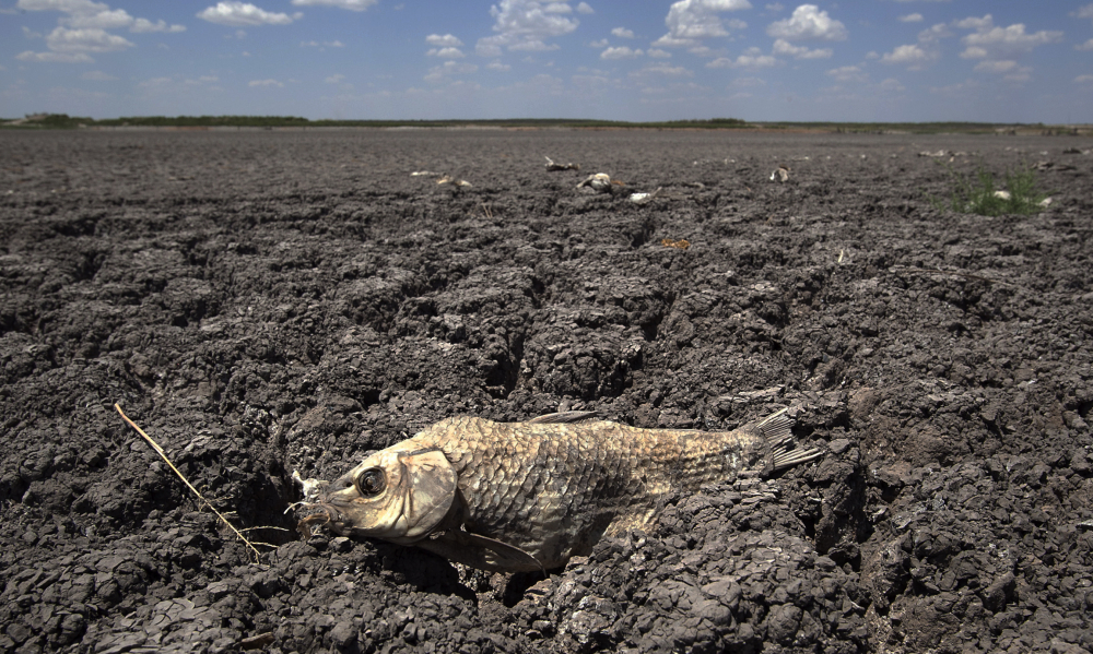 The remains of a carp are seen on the dry lake bed of O.C. Fisher Lake in San Angelo, Texas, in 2011. According to data released by the National Oceanic and Atmospheric Administration on Tuesday, the new United States normal is not just hotter, but wetter in the eastern and central parts of the nation and considerably drier in the West than just a decade earlier.