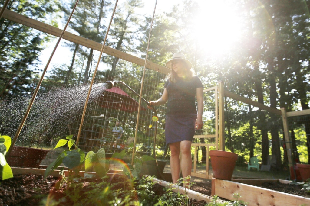 SOUTH PORTLAND, ME - JUNE 25: Eileen Bernier waters the garden at her South Portland home on Thursday. (Staff photo by Ben McCanna/Staff Photographer)