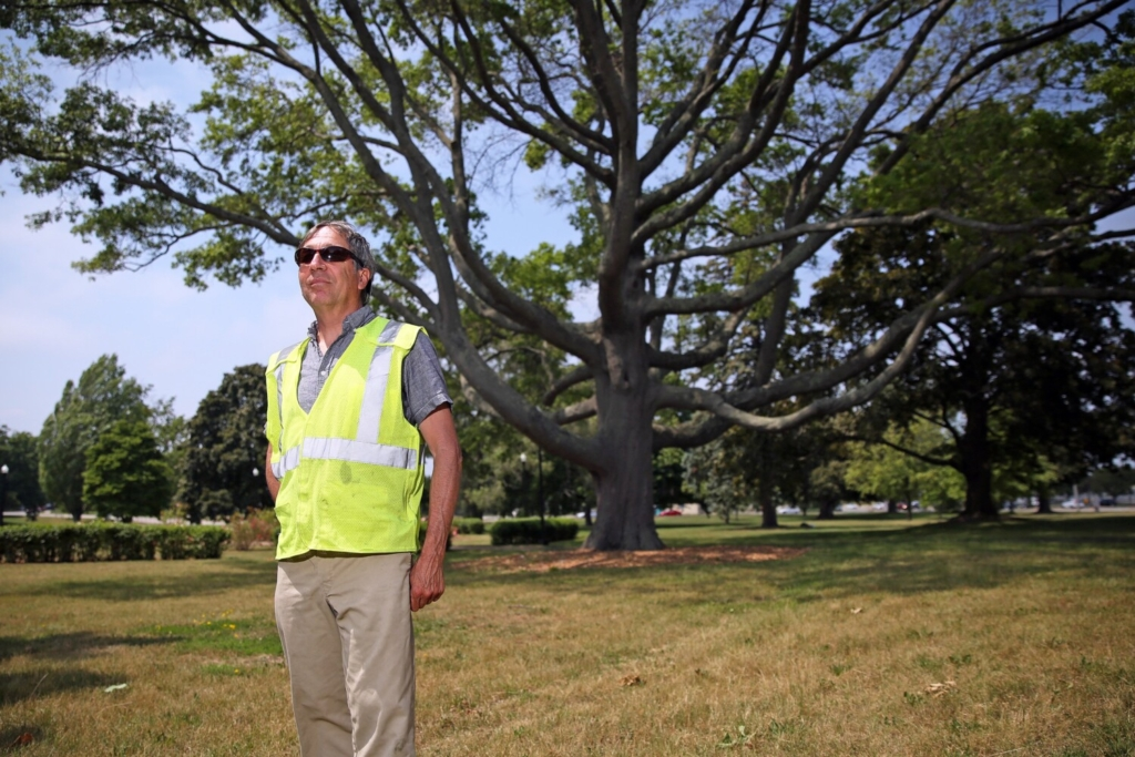 Portland City Arborist Jeff Tarling stands near the Candelabra Tree in Deering Oaks. One of the most recognized and largest trees in the state, it is suffering from a browntail moth caterpillar infestation.