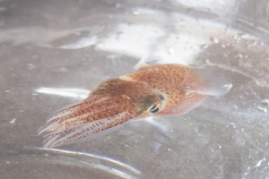 Squid_in_Space_08037