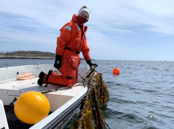 University of New England graduate student Jessica Vorse holds a line of kelp. Vorse is working with professors Carrie Byron and Kristin Burkholder on a study that would address the gap in food safety regulations for edible seaweed.