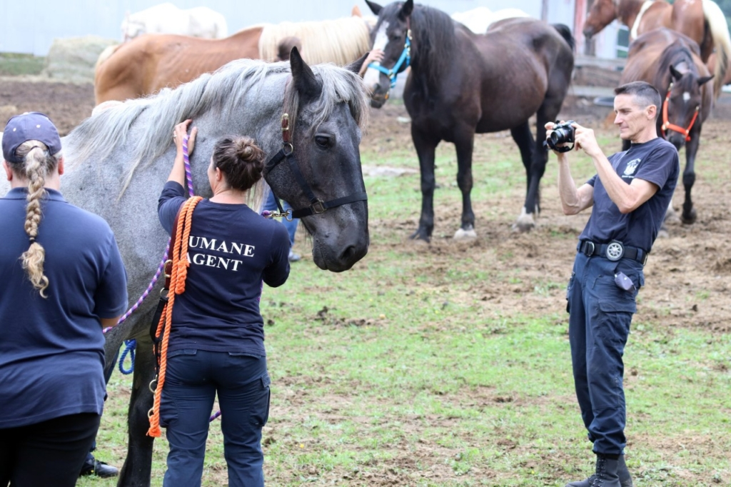 Animal welfare workers with some of the horses that were seized by the state from a Sanford farm.