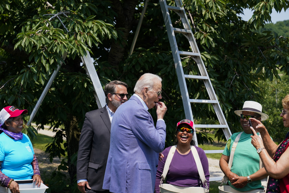 President Biden eats a freshly picked cherry from a bucket while meeting with workers as he tours King Orchards fruit farm with Sen. Gary Peters, D-Mich., and Sen. Debbie Stabenow, D-Mich., right, on Saturday in Central Lake, Mich.
