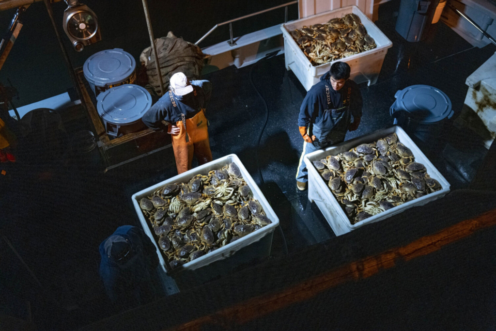 Workers prepare to offload Dungeness crab from a boat on Pier 45 in the Fisherman's Wharf district in San Francisco, California, in January.