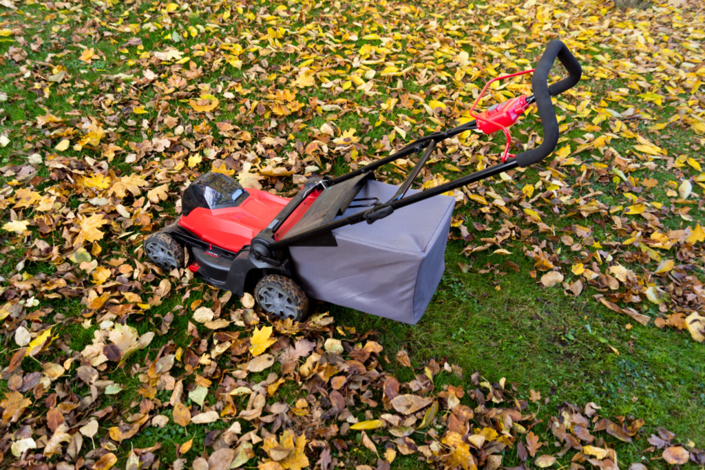 Many lawn mowers will grind up the fall leaves into a fine mulch known as leaf mold.