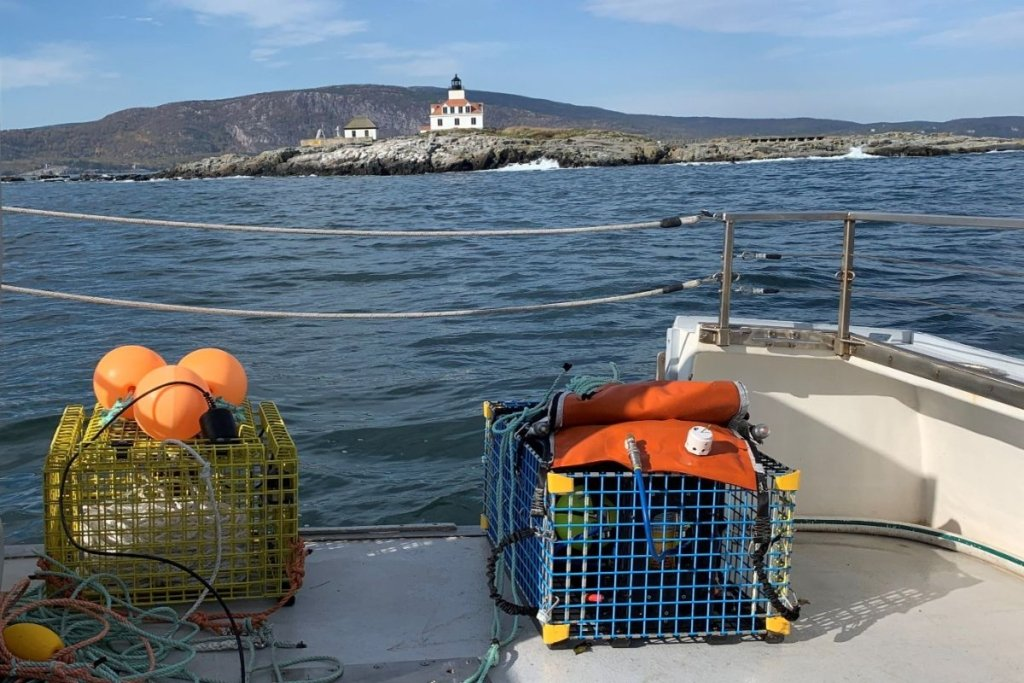 """Two types of """"ropeless"""" fishing gear out on a fall 2020 test run in view of Egg Rock Lighthouse in Frenchman Bay."""