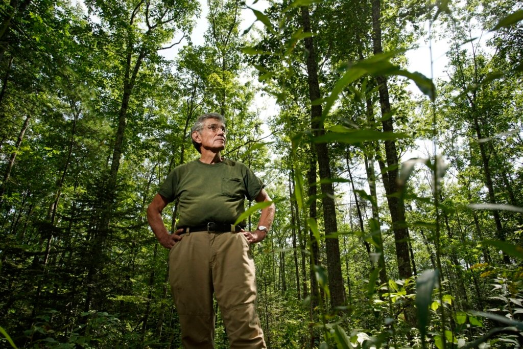 WHITEFIELD, ME – SEPTEMBER 8: Tony Marple stands in an area of forest on his Whitefield farm that he thinned two years ago to encourage maple, oak and birch trees to mature, not for use as saw logs but for their carbon storage potential. Marple's practices are in line with what a state task force is recommending for the state to offset its carbon footprint. Photographed on Wednesday, September 8, 2021. (Staff photo by Gregory Rec/Staff Photographer)