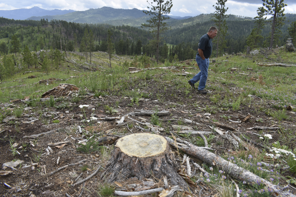 Blaine Cook, a retired U.S. Forest Service forest management scientist, walks through a logging site in the Black Hills National Forest in July near Custer City, S.D. Cook said his monitoring work last decade showed too many trees were being cut from the forest.
