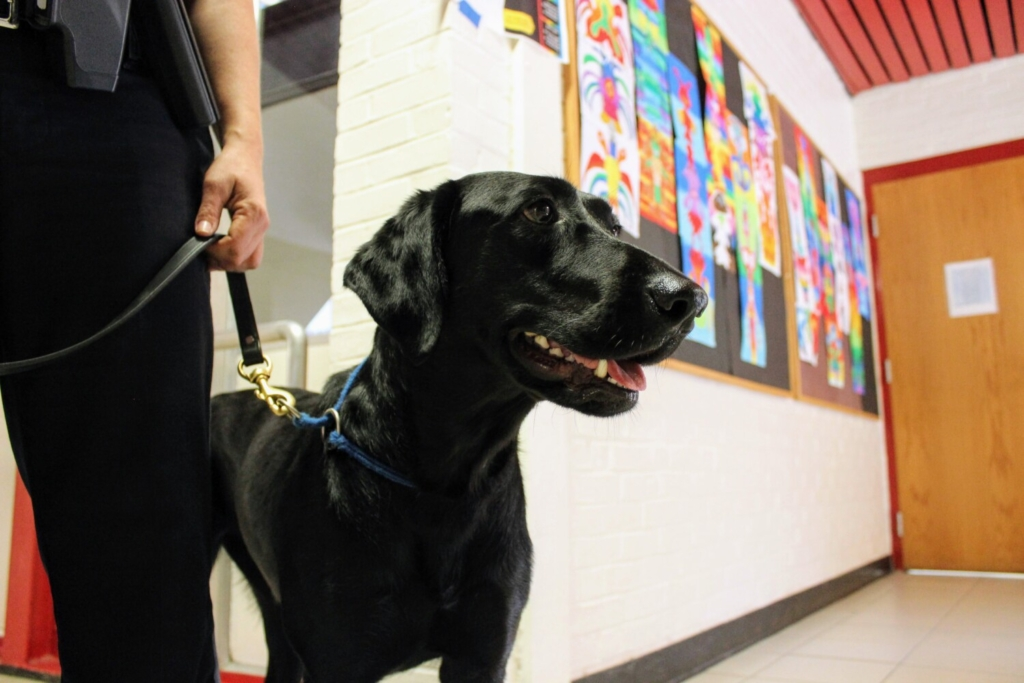 New support dog at Brunswick school aims to break down barriers, ease student stress