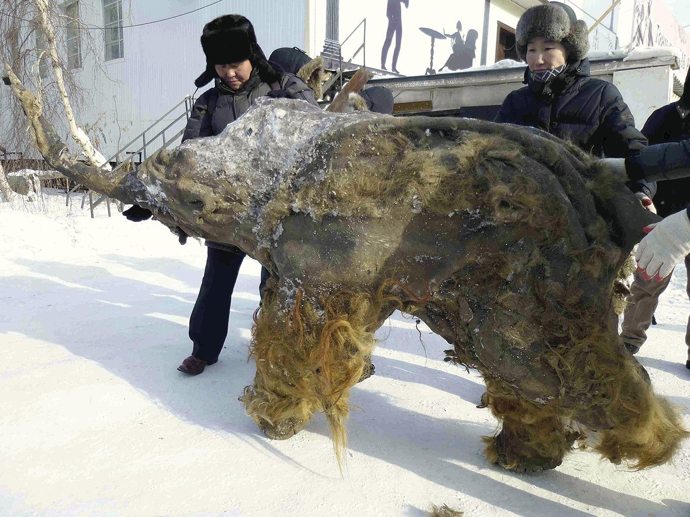 Mammoth cloning project takes a step forward