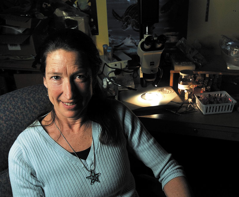WORMOLOGY: Nancy Prentiss, a biology professor at the University of Maine at Farmington, is taking a group of UMF students to the Virgin Islands next month to study worms.