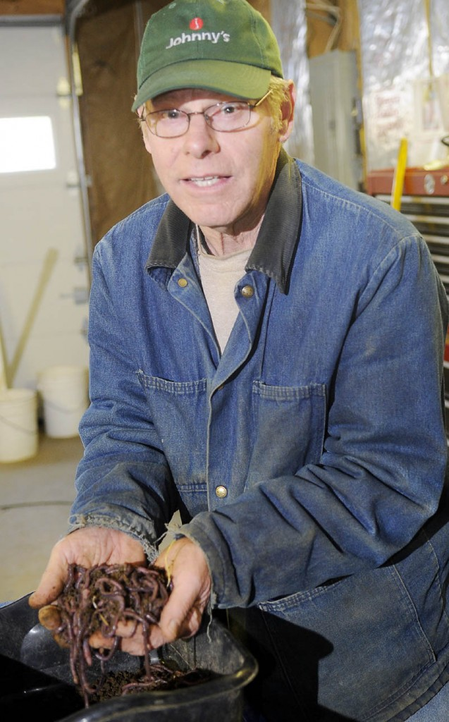 Earthworms raised by Richard Reed at R&L Berry Farm in Readfield.