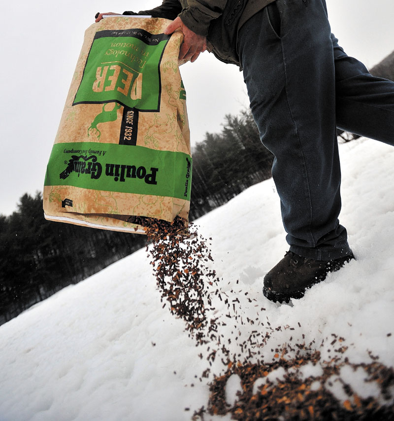 Gordon Berry walks through the ball fields dispersing a bag of deer feed for a herd of hungry deer in West Forks Tuesday evening.