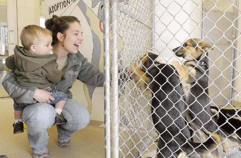 Jordan Thompson and her son Brayden get a closer look at shepherd-mix puppies from Alabama that were up for adoption on Friday morning at the Kennebec Valley Humane Society in Augusta. The family ended up taking one of them home.