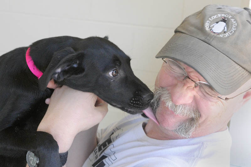Mark Labrecque gets a lick from a Lab-mix puppy he and his wife Wendy Labrecque decided to adopt on Friday morning at the Kennebec Valley Humane Society in Augusta. The young dogs arrived about two weeks ago from Alabama, where they were rescued from a crowded shelter where they would have been euthanized if they had not been transferred elsewhere, according to Hillary Roberts, executive director of the shelter.