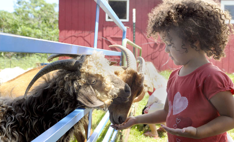 BILLY GOAT GREEDY: Naomi Eyerman, 3 of Readfield, feeds grain to goats on Sunday afternoon at Friends' Folly Farm in Monmouth during Maine's 22nd annual Open Farm Day events there.