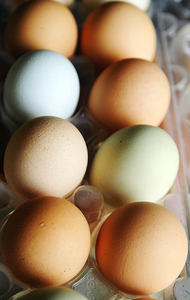 The hens at at Emma's Family Farm in Windsor lay eggs in various shades of brown along with blue and green.