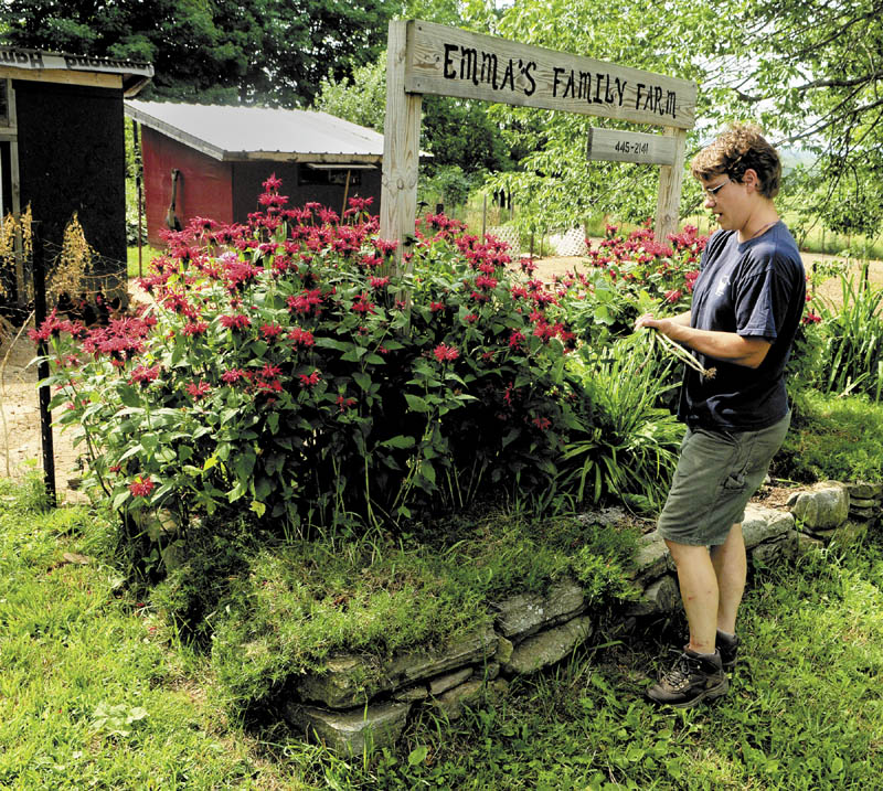 Rose Hoad prunes flowers in front of the sign on Thursday morning at Emma's Family Farm in Windsor. She threw them over the fence to feed the chickens in an enclosure in the background. The farm at 135 Windsor Neck Road will be part of Open Farm Day program this Sunday.