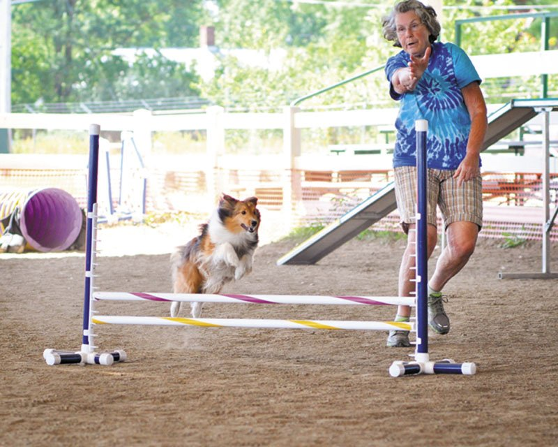 DOGGONE GOOD: Jackie Dennis of Farmington and her Sheltie Piper run through a timed course at the Eastern Maine Agility Club's canine agility trials Sunday at the Skowhegan State Fairgrounds.
