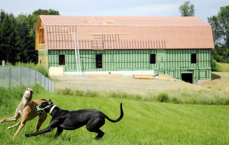 A pair of Greyhounds frolic Tuesday on the grounds of the Maine Greyhound Placement Service in Augusta. The group is building a new facility, above, at its site to kennel and condition rescued Greyhounds.