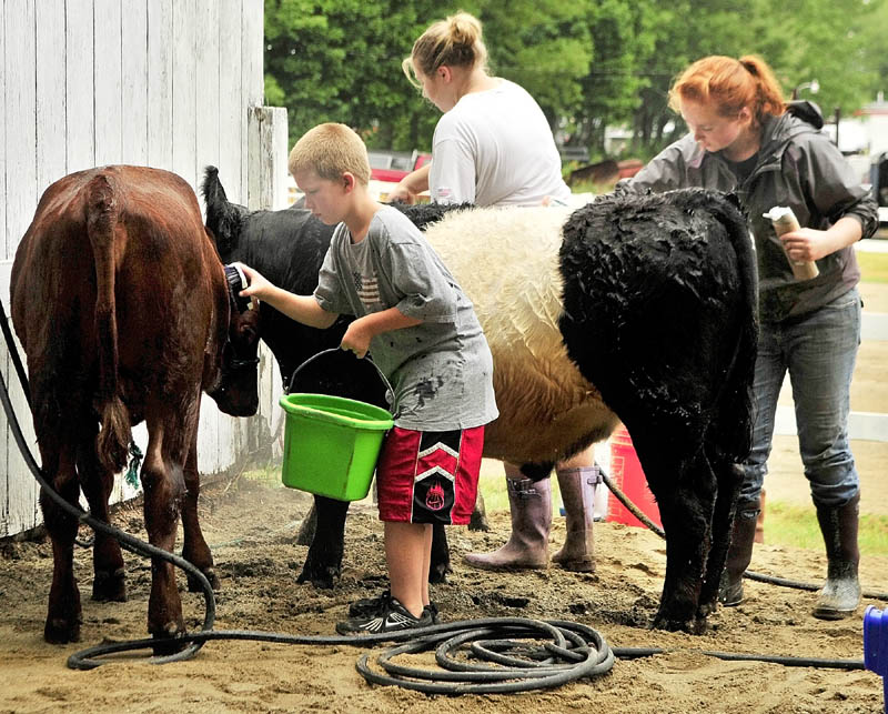 Cameran Fitch, left, Catherine Berry and Autumn Clair, wash up their cattle as they prepare for the 4-H and open dairy and beef cattle shows on Thursday morning at the Monmouth Fairgrounds on Academy Road in Monmouth. The fair runs through Saturday.
