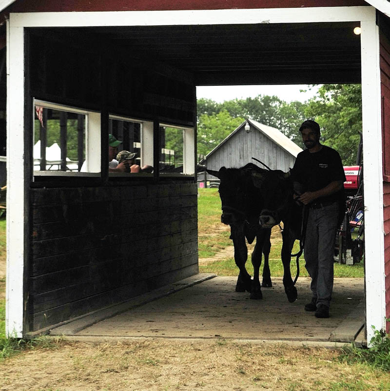 Scott Wheelis, of Bowdoin, leads Luke and Fester onto the scales on Thursday morning at the Monmouth Fairgrounds on Academy Road in Monmouth. Steers and oxen are weighed before competitions to see which class they'll compete in. The fair runs through Saturday.