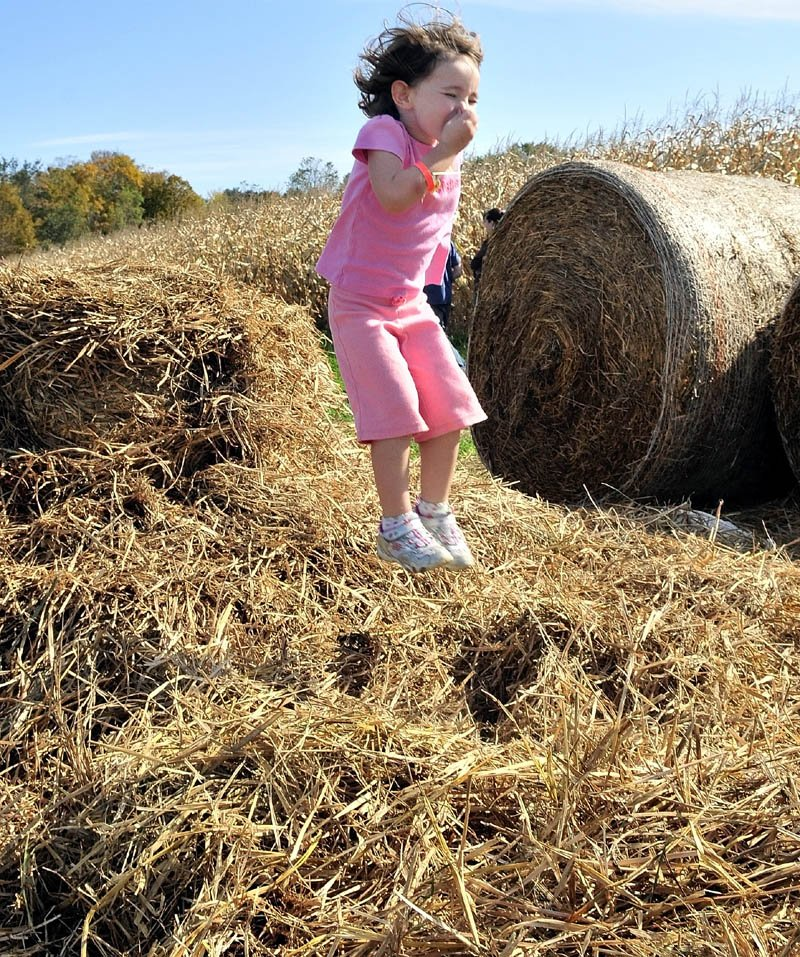 HAY KID: Meaghan Bowden covers her nose as she jumps from a round hay bale into loose hay at the Sandy River farm corn maize in Farmington on Sunday.