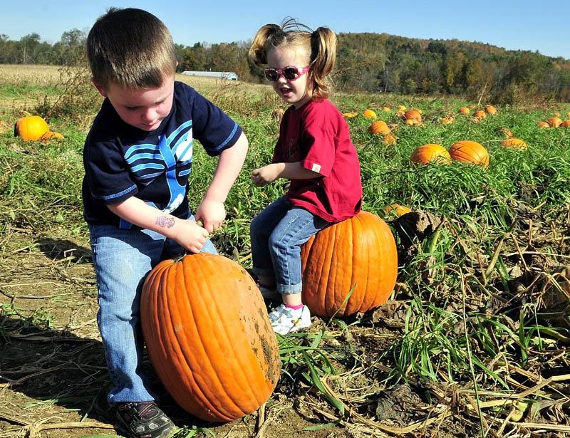 GREAT BIG PUMPKIN: Loral Pion tries hard to lift the pumpkin he picked at the Sandy River farm corn maize on Route 2 in Farmington. Resting on her choice is Griffin Dickey.