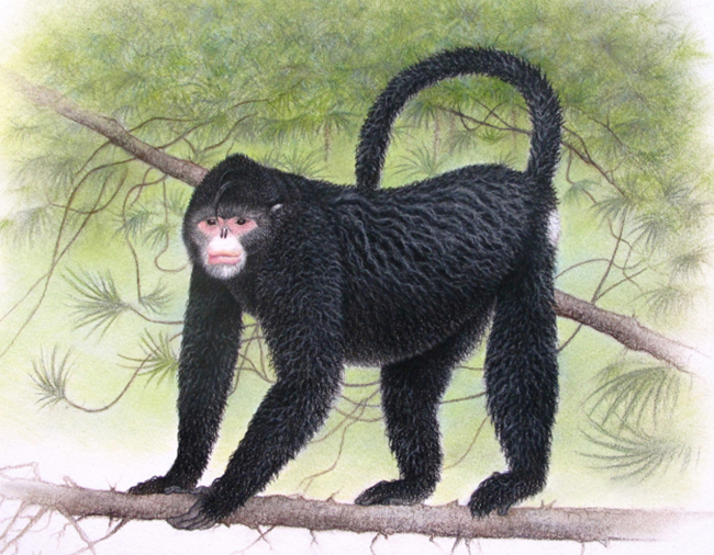 "A monkey with an ""Elvis"" hairdo is among 208 new species described by scientists in the Mekong River region of Southeast Asia."