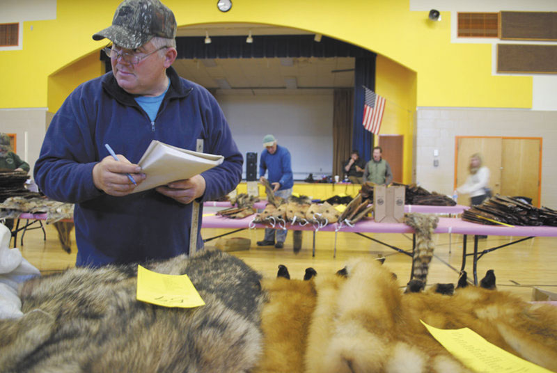 CHECKING IT OUT: Jerry Braley, a fur buyer from Kenduskeag, decides which pelts to buy at the Palmyra Fur Auction on Dec. 11. Braley, a trapper for nearly 50 years, hopes trapping is past on to Maine's youth.
