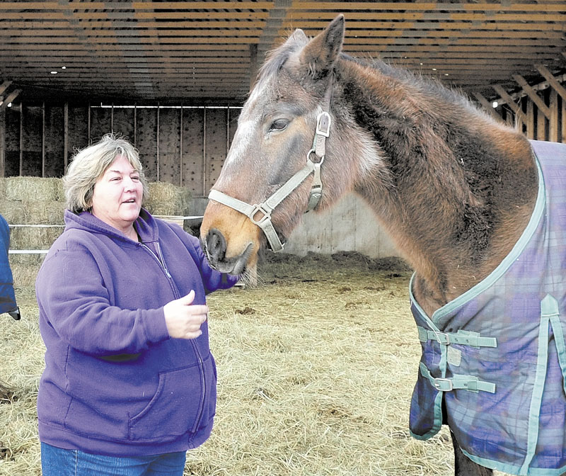 HELPING HANDS: Arleen Masselli greets one of the horses at her Knowlton Corner farm in Farmington on Wednesday.