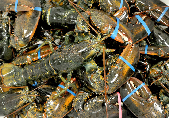 Lobsters at Free Range Lobster in Portland in a May 6, 2011, photo.