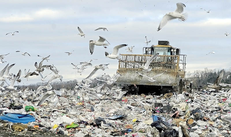 Birds swirl around the compactor at Hatch Hill landfill on Tuesday afternoon in Augusta. City officials are in discussions about a trash to diesel facility at the site
