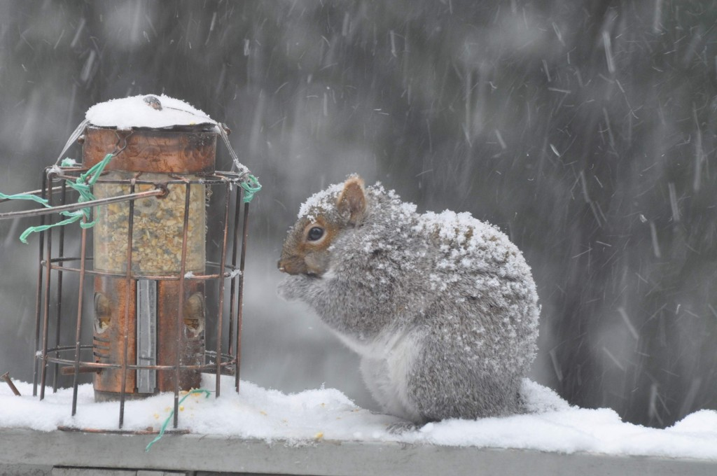 A squirrel is seen Thursday beside a bird-feeder in Belgrade.