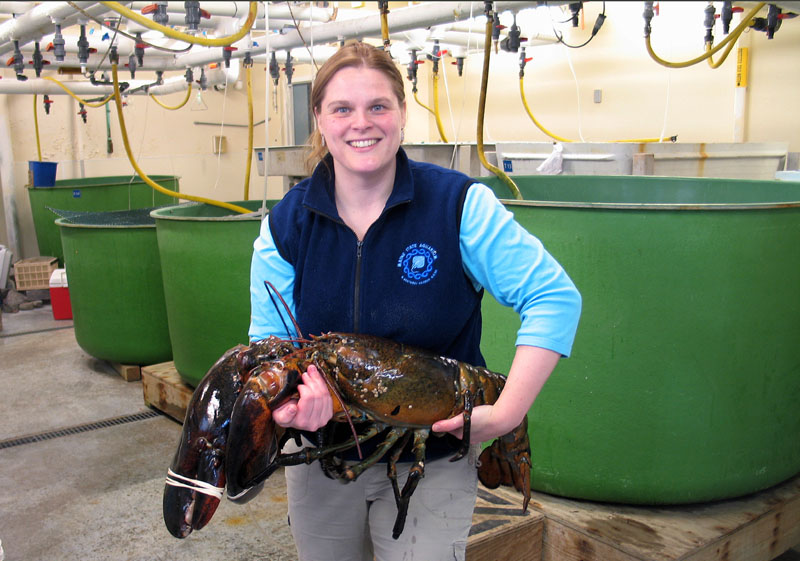 "Maine State Aquarium Director Aimee Hayden-Rodriques holds a 27 pound, nearly 40 inch long, lobster caught by Robert Malone off the coast of Maine near Rockland, last week. The aquarium named the crustacean ""Rocky."""