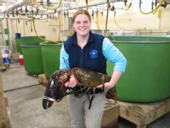 """Maine State Aquarium Director Aimee Hayden-Rodriques holds a 27 pound, nearly 40 inch long, lobster caught by Robert Malone off the coast of Maine near Rockland on Feb. 17. The aquarium named the crustacean """"Rocky."""" (AP Photo/Maine State Aquarium)"""