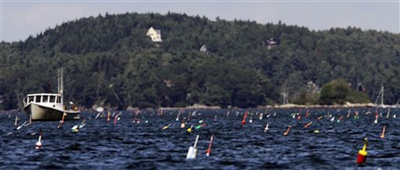 In this August 2011photo, hundreds of lobster buoys dot the ocean near a lobster boat off of Phippsburg, Maine. (AP Photo/Pat Wellenbach, File)